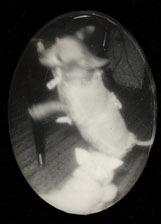 Katzencontent aus den 20er-Jahren